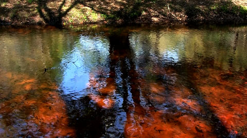 Beautiful reflections on the water of a swamp in t Stock Video Footage