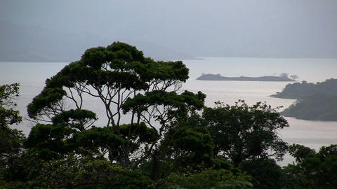A generic shot of a tropical jungle with ocean bac Stock Video Footage
