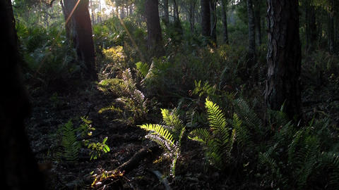 Mystical light filters into a tropical rainforest Stock Video Footage