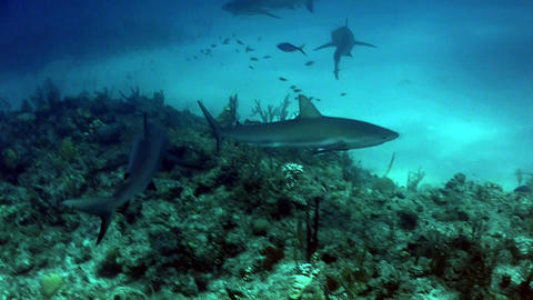 Sharks swimming underwater Stock Video Footage