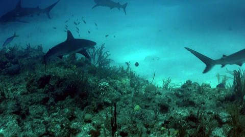 Sharks swimming underwater Footage