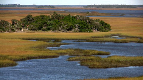 A salt marsh near St. Augustine, Florida Footage