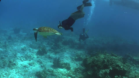 A sea turtle swims underwater with a diver backgro Footage