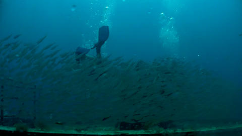 Millions of fish swimming around a diver from belo Stock Video Footage