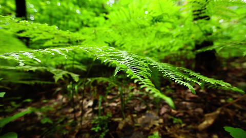 Macro close up of tropical fern Footage
