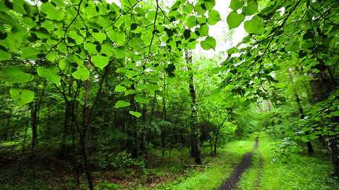 Green forest with green leaves over blurred background Footage