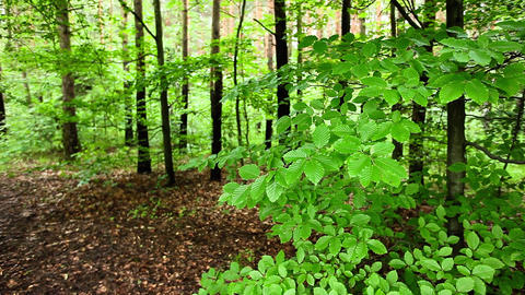Green forest with green leaves over blurred background Live Action