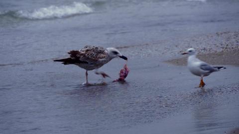 Gulls On Black Sea Shore Waves Sandy Beach 4K Live Action