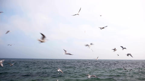 Gulls Are Flying Above Black Sea 8 Live Action