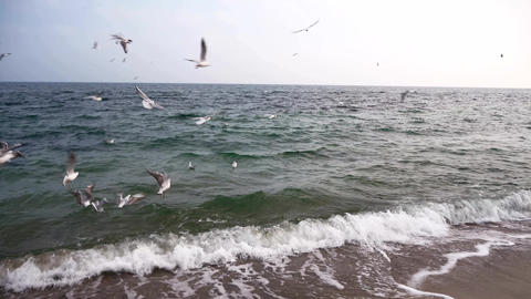 Gulls Are Flying Above Black Sea 9 Live Action