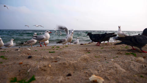 Gulls And Doves On The Sea Shore Cloudy Sky, Waves, Beach 4 Live Action