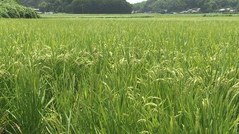 japanese green rural sean Footage