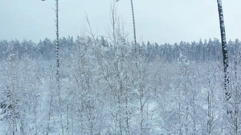 Winter forest covered with snow view from above Live Action