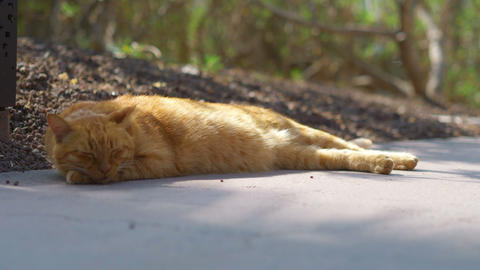 Cat sleeping on the pavement in 4k slow motion 60fps Live Action