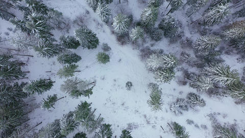 Descent over the winter snow-covered forest. Winter forest as background Live Action