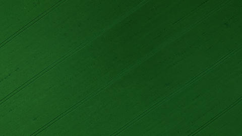 Flying over a green wheat field, agricultural industry. Natural texture Live Action