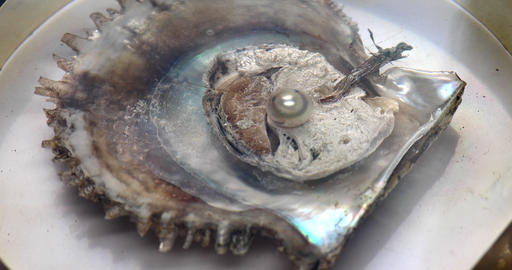 open oyster Live Action