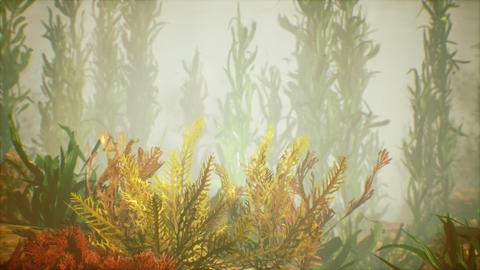 Underwater tropical colourful soft-hard corals seascape Live Action