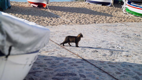 Cat on the boat parking. Funny tiger green-eyed cat hanging out near the fishing Live Action