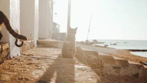 Three cats by the sea. Funny tiger green-eyed cat siblings hanging out near the Live Action