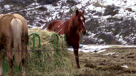 horses feeding Idaho mountainside nearby Hell's Canyon Live Action