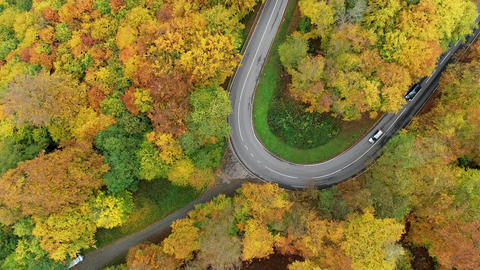 Road through a colourful autumnal forest Live Action
