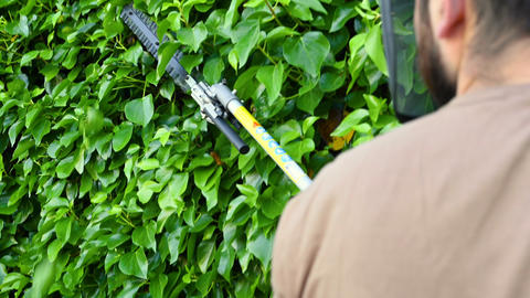 Gardener cutting a hedge with electric hedge trimmer in the garden Live Action