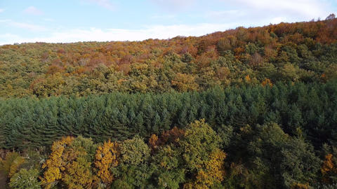 Autumn forest aerial view. Woodland in fall season, nature panorama Live Action