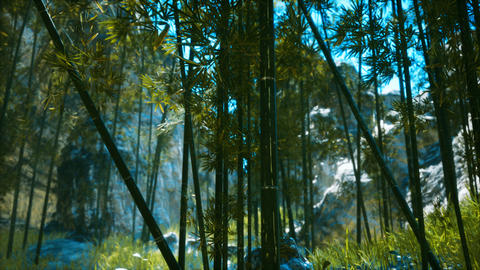 Asian Bamboo forest with sunlight Live Action