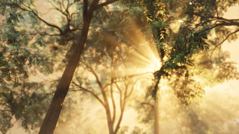 Rays of bursting sunlight in a misty forest Live Action