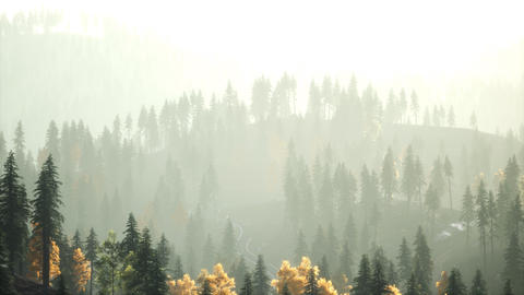 Sunlight in spruce forest in the fog on the background of mountains at sunset Live Action