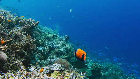 Underwater landscape of coral reef amazing underwater marine life world scuba diving and snorkeling Live Action