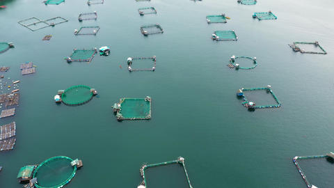 Fishing industry. Fish farming on an industrial scale Live Action