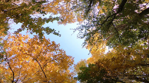 Autumn nature Live Action