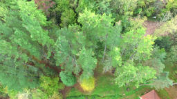 Aerial View Up to the Top of the Trees in Early Autumn Footage