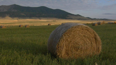 Round bales of hay sit on a grassy plain Stock Video Footage
