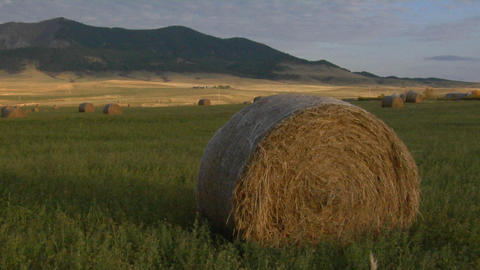 Round bales of hay sit on a grassy plain Footage