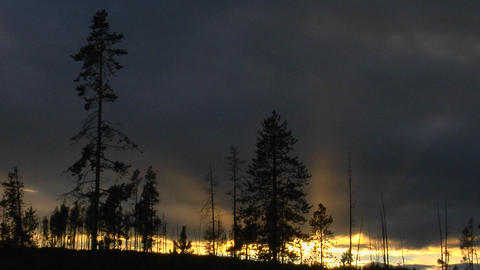 Trees that survived a forest in Yellowstone National Park... Stock Video Footage