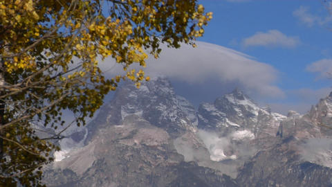 Autumn leaves rustle in the wind with the Grand Tetons in... Stock Video Footage