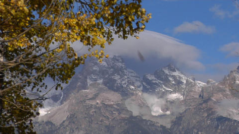 Autumn leaves rustle in the wind with the Grand Tetons in the background Footage