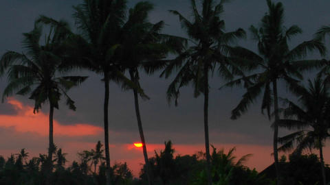 palm trees stand high in the orange and red sky Stock Video Footage