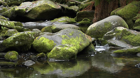 Moss covered rocks are reflected in a stream Stock Video Footage