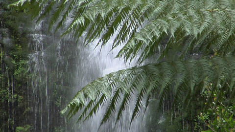 Ferns grow in a rain forest with a waterfall in the... Stock Video Footage