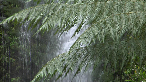 Ferns grow in a rain forest with a waterfall in the background Footage