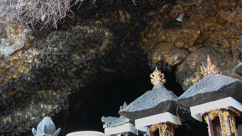 Bats hang on the walls at the Pura Goa Lawah Temple in Indonesia Footage