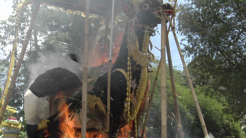 A Brahma Bull burns during a Balinese cremation ceremony Footage