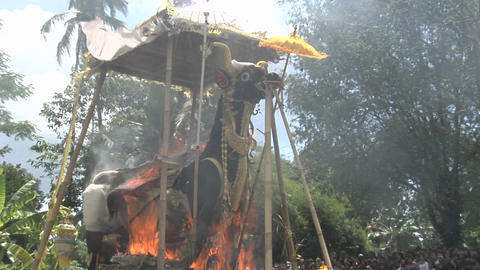 A Brahma Bull burns during a Balinese cremation ceremony Stock Video Footage