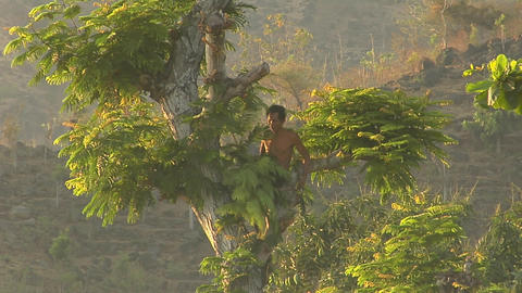 A man cuts branches with a machete high up in a tree Stock Video Footage