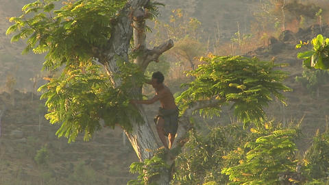 A man cuts branches with a machete high up in a tree Footage