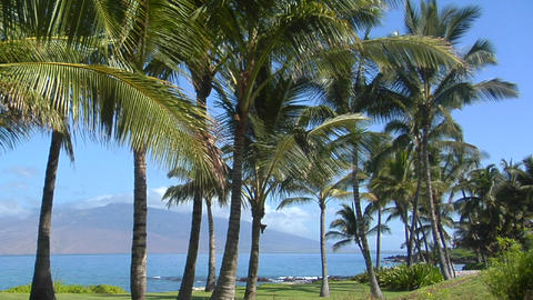 Beautiful palms line a tropical beach in Hawaii Stock Video Footage
